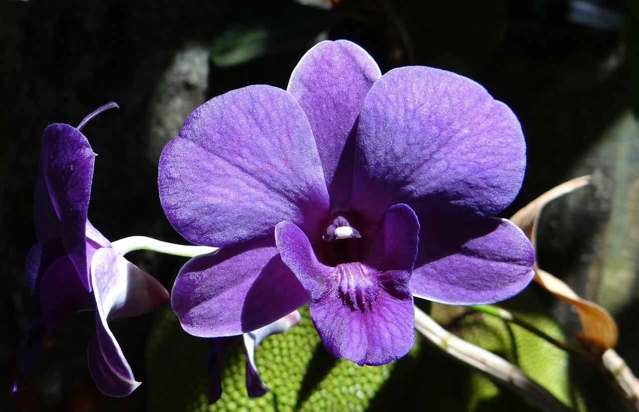 les pouvoirs de l'orchidée