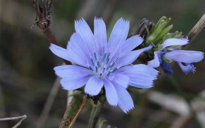 Découvrez l'univers des fleurs de Bach avec Julien Parra