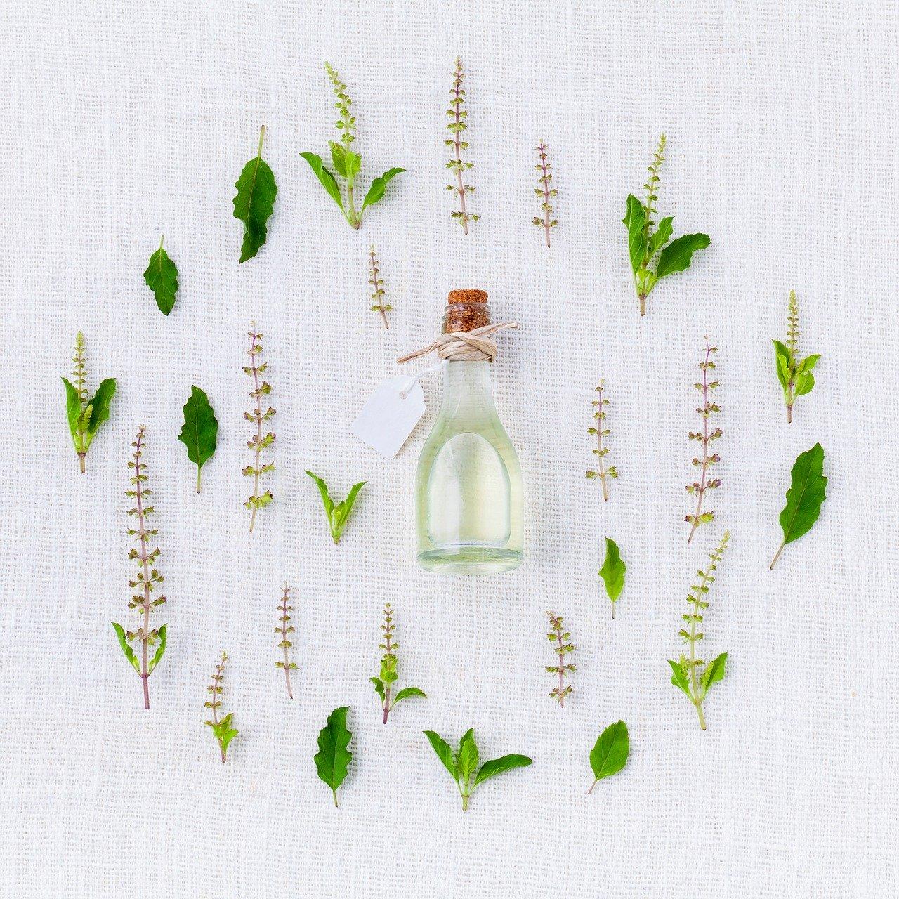 utilisation des plantes médicinales