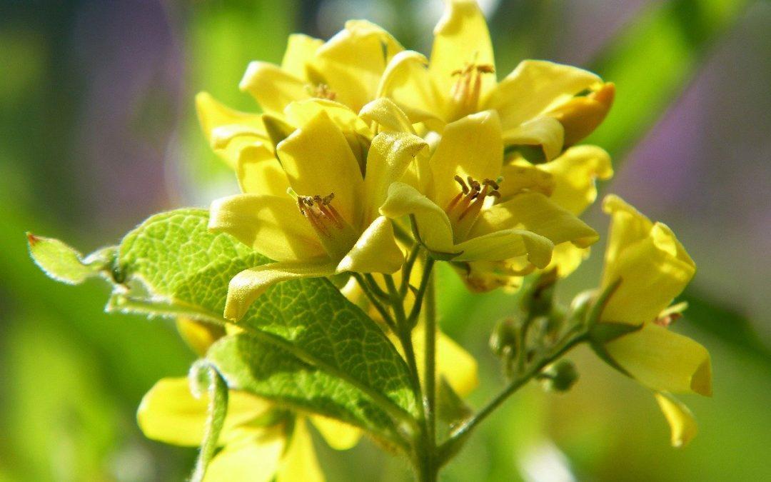 Les plantes médicinales de l'intestin