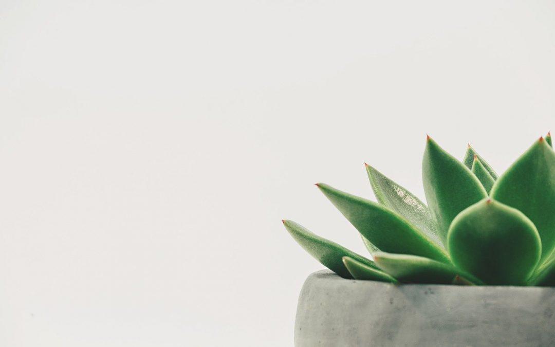 Le top 5 des plantes dépolluantes